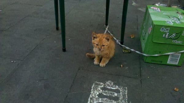 可怜的小橘猫