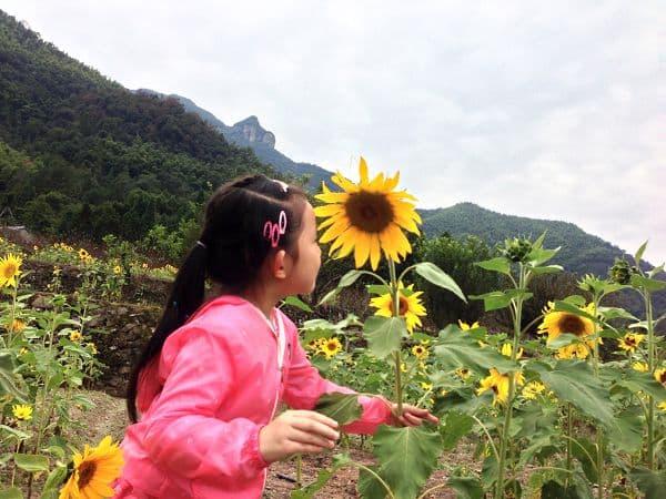 小萝莉与向日葵